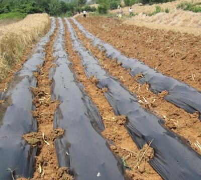 农用地膜案例