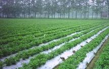农用地膜厂家|2018年农用地膜市场调查